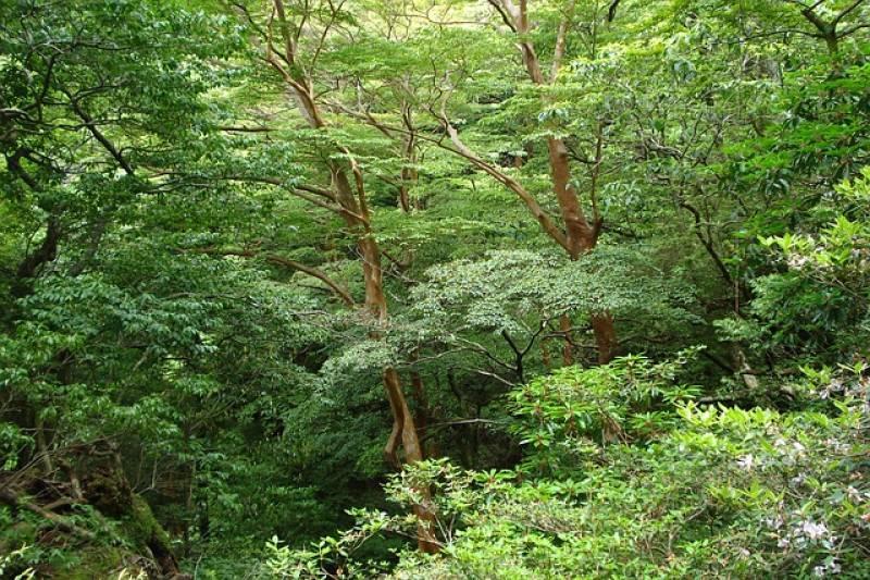 Χάθηκαν 430 εκατ. στρέμματα δάσους μέσα σε 13 χρόνια – Κίνδυνος για πανδημίες