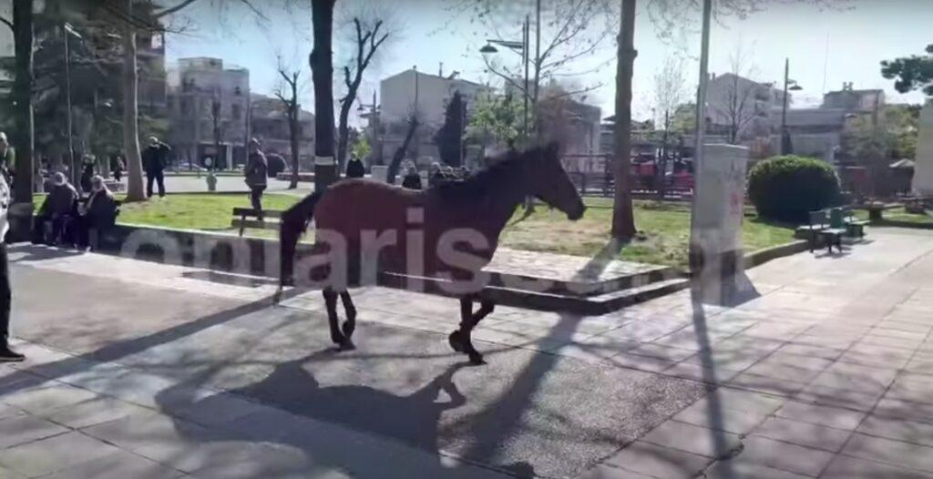 Άλογο έκανε …βόλτες μόνο του σε κεντρικό δρόμο της Λάρισας! (video)