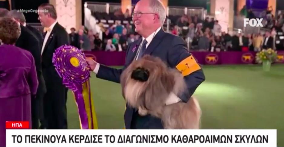 Kαι όμως! Αυτό είναι το πιο όμορφο σκυλί του κόσμου! (video)