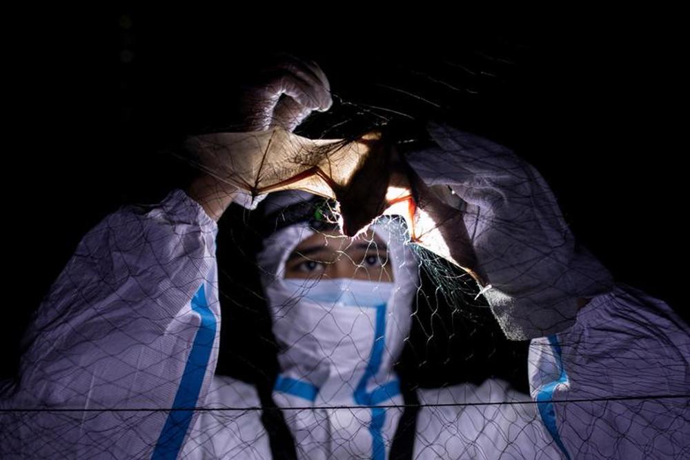 Βίντεο με νυχτερίδες από εργαστήριο της Ουχάν πυροδοτεί νέα σενάρια για την προέλευση του κορωνοϊού