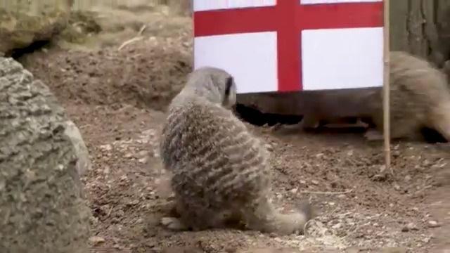 Euro 2020: Συμπαθή ζωάκια στο Λονδίνο …προβλέπουν τον νικητή του αυριανού τελικού