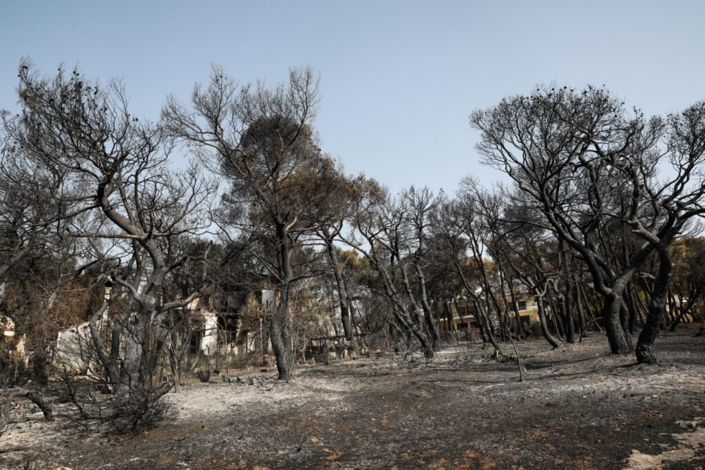 Δήμος Διονύσου: Παροχή πληροφοριών για ανεύρεση δεσποζόμενων και αδέσποτων ζώων που απομακρύνθηκαν λόγω της πυρκαγιάς